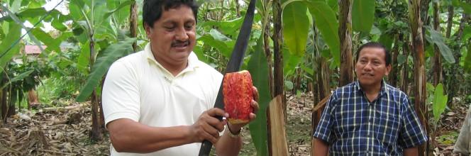 Alterfin finance le commerce équitable et l'agriculture paysanne