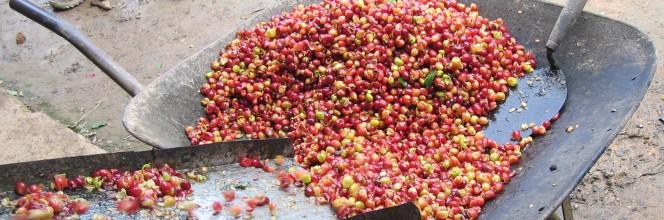 Critères et procédure pour les organisations d'agriculture paysanne