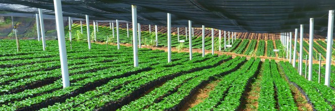 Ecologische prestatie van Alterfin en haar partners in het Zuiden